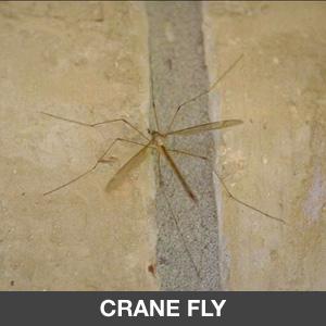 Pest Control : Sentinel Pest Management | Orange County Pest